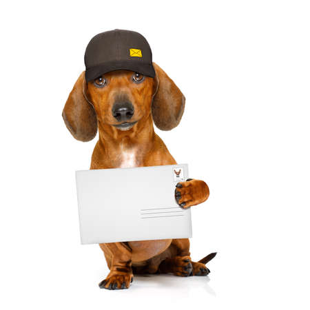 big: dachshund sausage dog delivering a big envelope as a postman with cap , isolated on white background