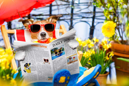 balcony: jack russell dog relaxing on a fancy red  hammock with sunglasses in summer  or spring vacation holidays  under umbrella reading newspaper magazine Stock Photo