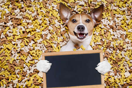 hungry jack russell dog inside a big mound or cluster of food , isolated on mountain of cookie bone  treats as background,holding a blank empty blackboard  or placard