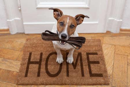 待っているジャック ラッセル犬、飼い主と散歩のために行く準備が革鎖によって自宅のドア