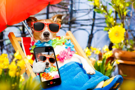 photo: jack russell dog relaxing on a fancy red  hammock with sunglasses in summer or spring  vacation holidays  taking a selfie with smartphone mobile device Stock Photo