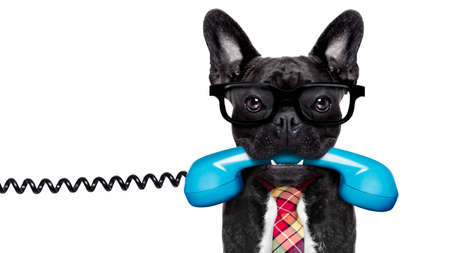 contact: french bulldog dog with glasses as secretary or operator with  old  dial telephone or retro classic phone, isolated on white background