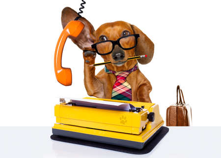 working office: office worker businessman dachshund sausage  dog  as  boss and chef , with suitcase  and typewriter  listening and hearing carefully on the phone or telephone  , isolated on white background Stock Photo