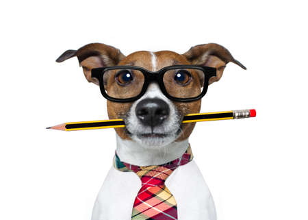 authors: jack russell dog with pencil or pen in mouth  wearing nerd glasses for work as a boss or secretary , isolated on white background