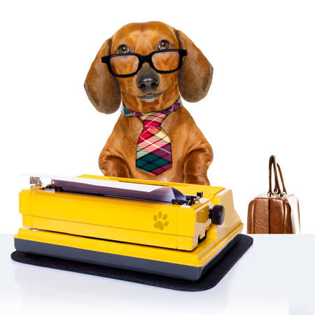 working office: office worker businessman dachshund sausage  dog  as  boss and chef , with suitcase  and typewriter  with  tie , isolated on white background