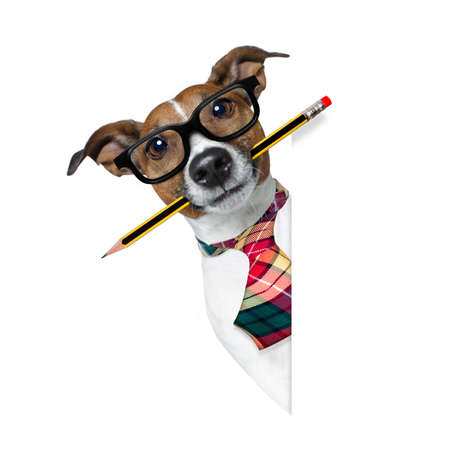 authors: jack russell dog with pencil or pen in mouth  wearing nerd glasses for work as a boss or secretary , isolated on white background, behind blank banner or placard