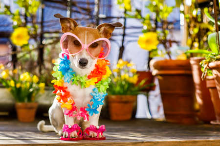 animal shadow: gay Jack russell dog relaxing on balcony with sunglasses in summer or spring  vacation holidays