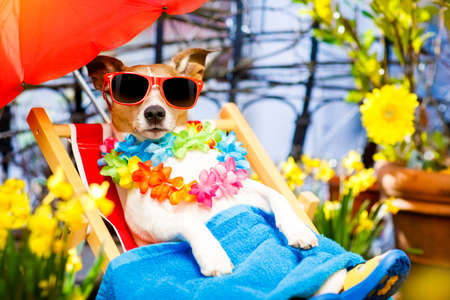 jack russell dog relaxing on a fancy red  hammock with sunglasses in summer or spring  vacation holidays  under umbrella on balcony at the terrace