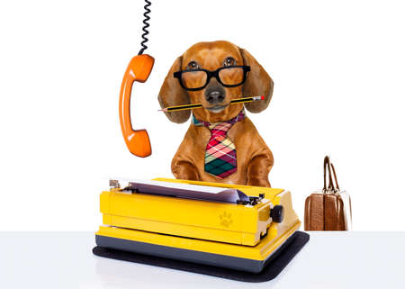 office worker businessman dachshund sausage  dog  as  boss and chef , with suitcase  and typewriter  listening on the phone or telephone  , isolated on white background