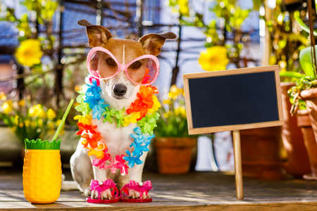 Jack russell dog relaxing on balcony with sunglasses in summer or spring  vacation holidays   with a cocktail drink
