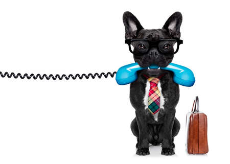 french bulldog dog with glasses as secretary or operator with  old  dial telephone or retro classic phone, isolated on white background