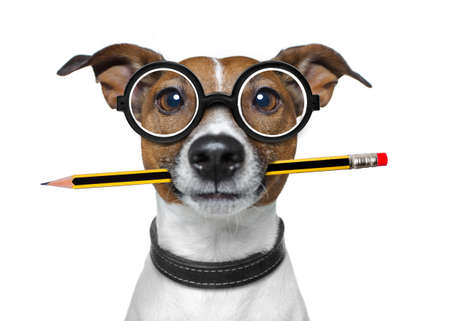 white work: jack russell dog with pencil or pen in mouth  wearing nerd glasses for work as a boss or secretary , isolated on white background
