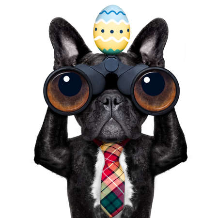 find: binoculars french bulldog dog with  easter  egg  ,isolated on white background