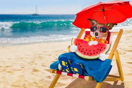 Jack Russel Hund Ruhe und Entspannung auf einer Hängematte oder Strandstuhl unter Sonnenschirm am Strand Ozean Ufer, auf Sommerferien Urlaub essen eine Wassermelone