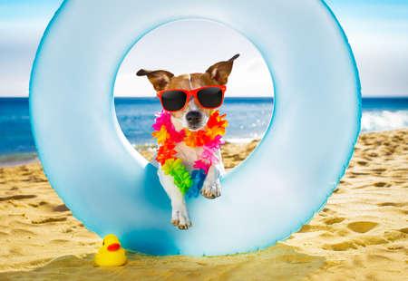 Jack russel cane che riposa e si distende su un materasso d'aria o un anello di nuoto sulla riva dell'oceano della spiaggia, durante le vacanze di estate Archivio Fotografico - 76664094