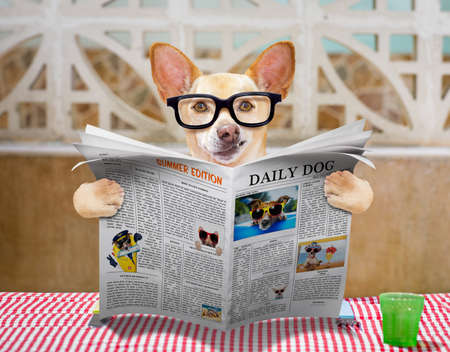 plate: hungry chihuahua dog eating with tablecloth utensils at the table , food  bowl , fork and knife , reading the newspaper or magazine