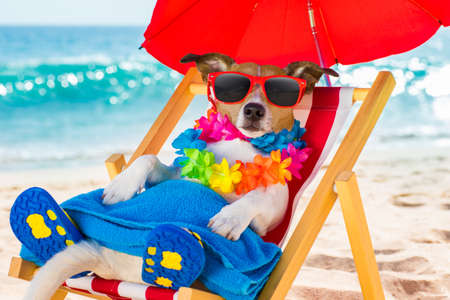 jack russel dog resting and relaxing on a hammock or beach chair under umbrella at the beach ocean shore, on summer vacation holidays