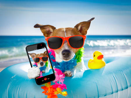 funny glasses: jack russel dog resting and relaxing on a air mattress or swim ring   at the beach ocean shore, on summer vacation holidays taking a selfie with smartphone or mobile phone Stock Photo