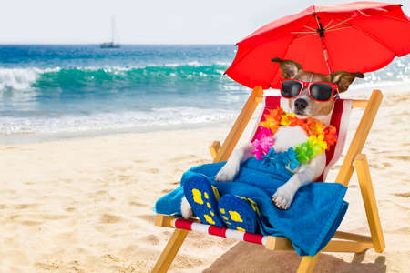 island: jack russel dog resting and relaxing on a hammock or beach chair under umbrella at the beach ocean shore, on summer vacation holidays