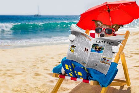 jack russel dog resting and relaxing on a hammock or beach chair under umbrella at the beach ocean shore, on summer vacation holidays reading a magazine or newspaper Stockfoto
