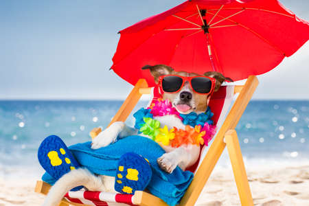 animal shadow: jack russel dog resting and relaxing on a hammock or beach chair under umbrella at the beach ocean shore, on summer vacation holidays