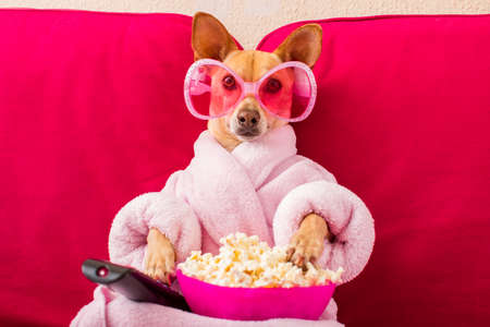 Perro chihuahua viendo televisión o una película sentado en un sofá rojo o sofá con control remoto cambiando los canales con palomitas de maíz