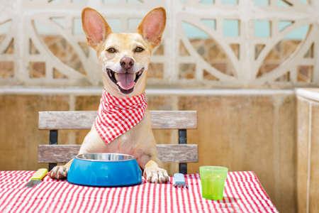 テーブル クロス道具表、フードボウル、フォークとナイフで食べる空腹チワワ犬 写真素材
