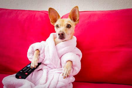 Chihuahua hond kijken tv of een film zittend op een rode bank of bank met afstandsbediening de kanalen te veranderen