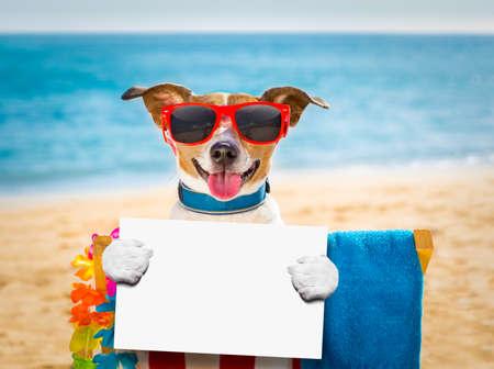 Jack russel hund ruht und entspannend auf einer hängematte oder strandstuhl unter regenschirm am strand ozeanufer, auf sommerferien feiertage mit einem banner oder placard Standard-Bild