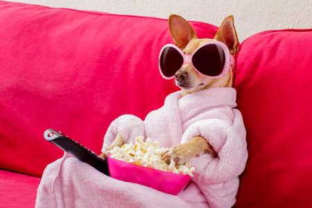 Chien de chihuahua regardant la télévision ou un film assis sur un canapé ou un canapé rouge avec télécommande changeant les canaux avec du pop-corn Banque d'images - 77755536