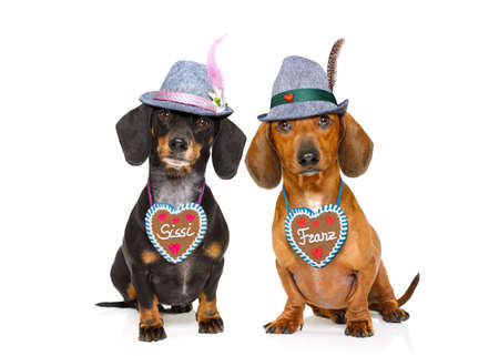 pretzel: bavarian dachshund or sausage  dogs couple with  gingerbread and  mug  isolated on white background , ready for the beer celebration festival in munich,