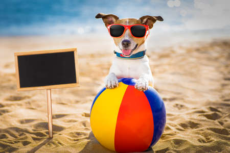 jack russel dog  at the beach ocean shore, on summer vacation holidays  with a plastic ball, banner or placard to the side Stock Photo