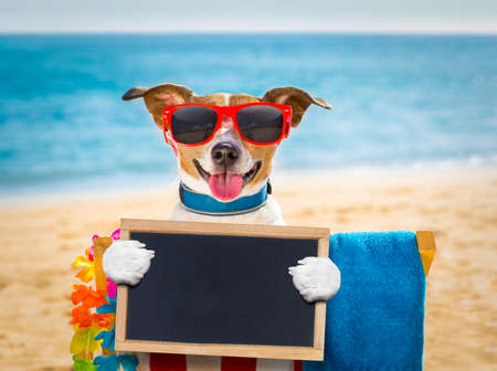 island: jack russel dog resting and relaxing on a hammock or beach chair under umbrella at the beach ocean shore, on summer vacation holidays holding a banner or placard