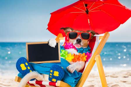 Jack russel hund ruht und entspannend auf einer hängematte oder strandstuhl unter regenschirm am strand ozeanufer, auf sommerferien feiertage mit einem banner oder placard