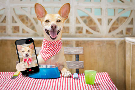 hungry chihuahua dog eating with tablecloth utensils at the table , food  bowl , fork and knife inlcuded, taking a selfie with smartphone or mobile phone Stock Photo