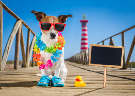 island: jack russel dog  at the beach ocean shore, on summer vacation holidays  with a plastic duck, lighthouse at the back banner or placard to the side