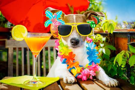 Jack Russell Hund entspannenden auf Balkon mit Sonnenbrille im Sommer oder Frühjahr Urlaub Urlaub mit einem Cocktail trinken