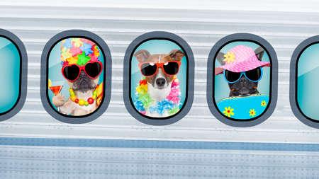 voyage: Vacances de vacances de vacances, les chiens qui se déplacent dans un avion, jettent un ancien avion rétro ou un avion, portant des lunettes de soleil Banque d'images
