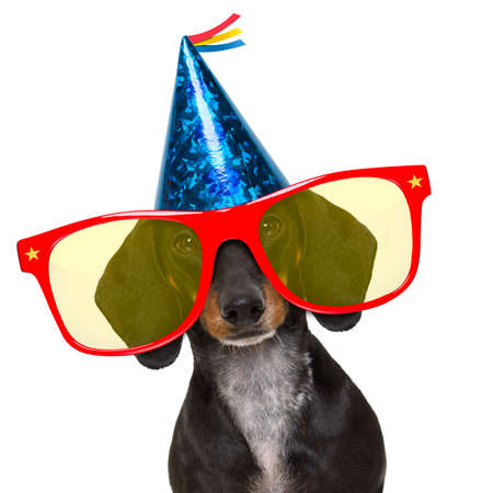 white: dachshund or sausage  dog ,wearing  red sunglasses and party hat  , isolated on white background