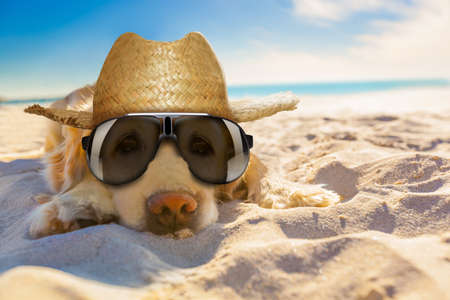 golden retriever dog relaxing, resting,or sleeping at the beach, for retirement or retired