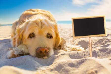 golden retriever dog relaxing, resting,or sleeping at the beach, for retirement or retired with a banner or placard to side Stock Photo