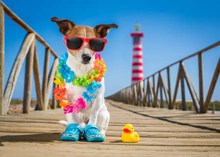 jack russel dog  at the beach ocean shore, on summer vacation holidays  with a plastic duck, lighthouse at the back