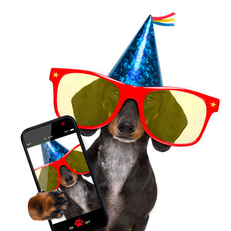 happy holidays: dachshund or sausage  dog ,wearing  red sunglasses and party hat  , isolated on white background, taking a selfie with a smartphone or cell phone