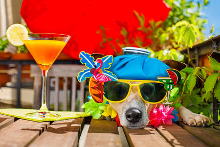 drunk sick ill jack russell dog with sunglasses in summer or spring  vacation holidays   with a cocktail drink and ice bag or pack on head