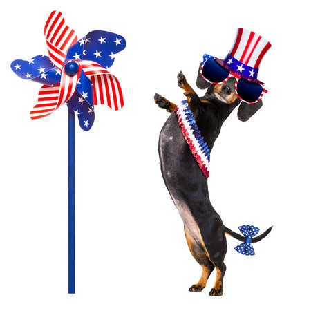 happy holidays: dachshund susage dog waving a flag of usa and victory or peace fingers on independence day 4th of july, isolated on white background