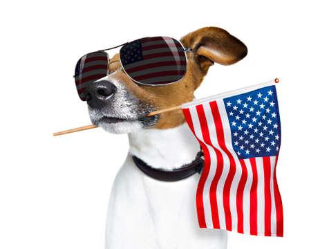 Jack Russell perro celebrando el día de la independencia el 4 de julio con la bandera de Estados Unidos en la boca, aislado sobre fondo blanco. Foto de archivo