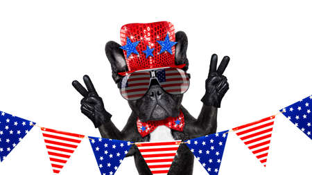 happy holidays: french bulldog dog celebrating  independence day 4th of july with  victory and peace fingers,  isolated on white background