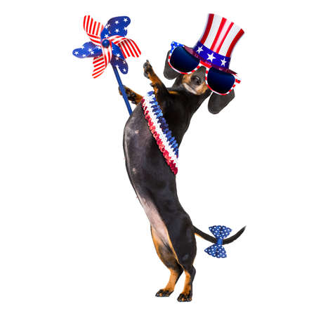 dachshund sausage dog waving a flag of usa and victory or peace fingers on independence day 4th of july, isolated on white background Stock Photo