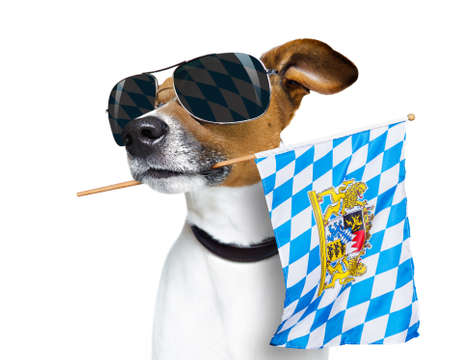white: jack russell dog celebrating  beer festival in munich , bavaria germany holding flag in mouth ,  isolated on white background