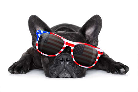 white: french bulldog dog celebrating  independence day 4th of july with  sunglasses,  isolated on white background